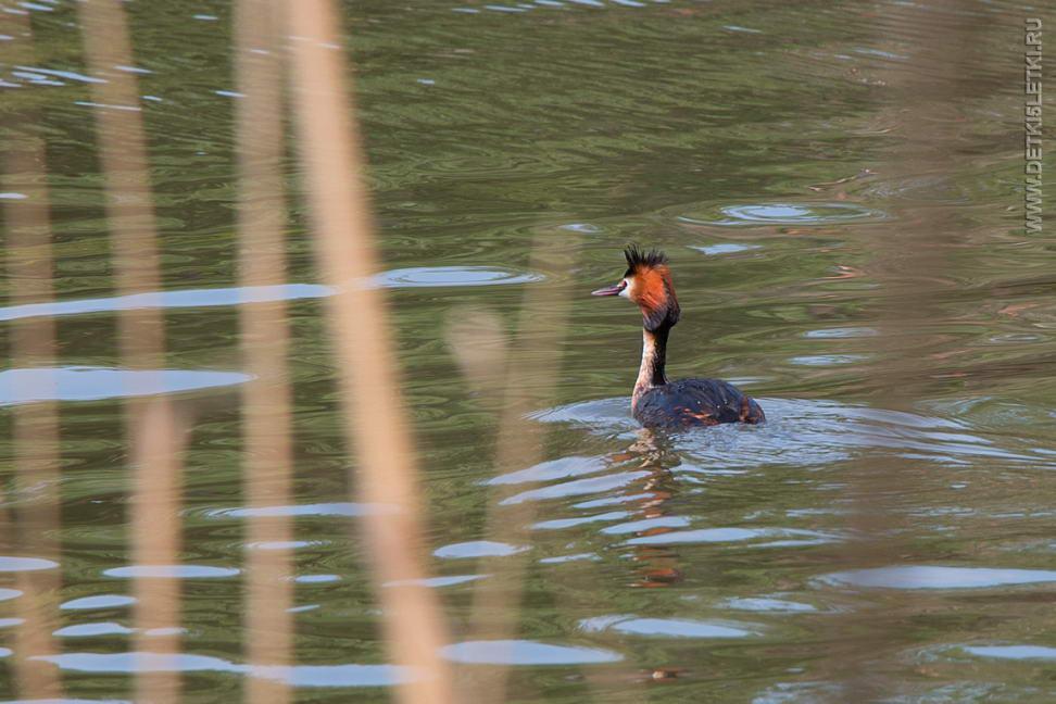 рыбалка на северном водохранилище в ростове